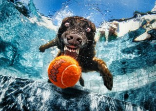 Seth-Casteels-Underwater-Dogs-9