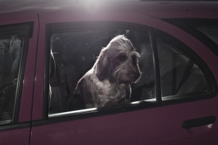dogs-in-cars-by-martin-usborne-gessato-gblog-24
