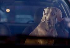 dogsincars6